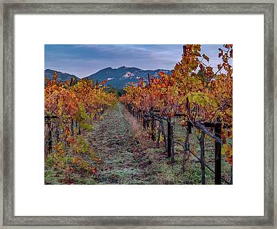 Fall In Wine Country Framed Print by Bill Gallagher