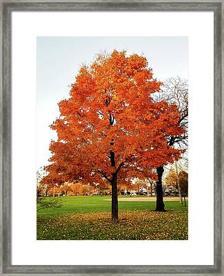 Fall Is Coming Framed Print by Britten Adams