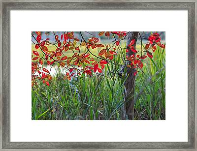 Fall Is Upon Us Framed Print by Terry DeLuco