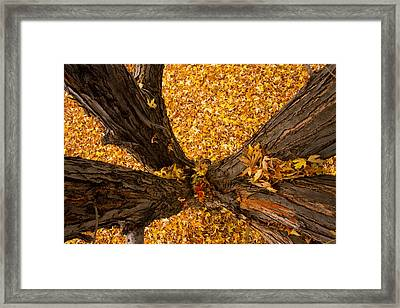 Fall Framed Print by James BO  Insogna