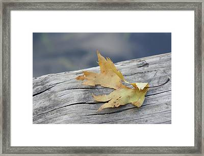Fall Leaf Framed Print by Art Spectrum