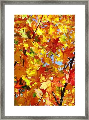Fall Leaves Background Framed Print by Carlos Caetano