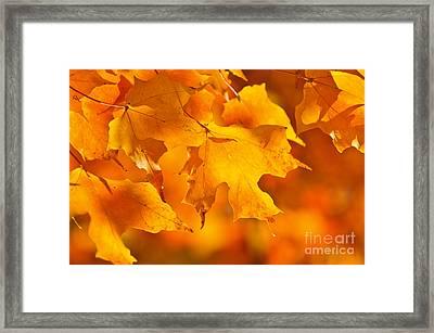 Fall Maple Leaves Framed Print by Elena Elisseeva