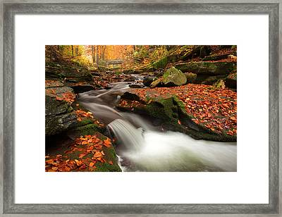 Fall Power Framed Print by Evgeni Dinev