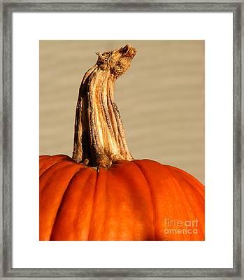 Fall Rising Framed Print by Amanda Barcon