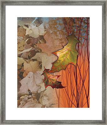 Fall Spectrum Framed Print by Harold Shull