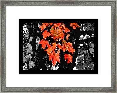 Fall Tree Framed Print by Karen M Scovill