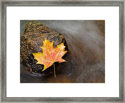 Fallen Leaf Framed Print by Jim DeLillo