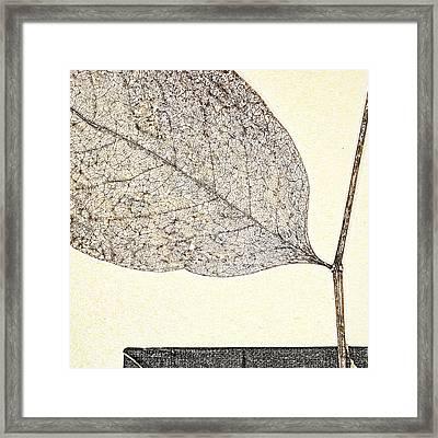 Fallen Leaf One Of Two Framed Print by Carol Leigh