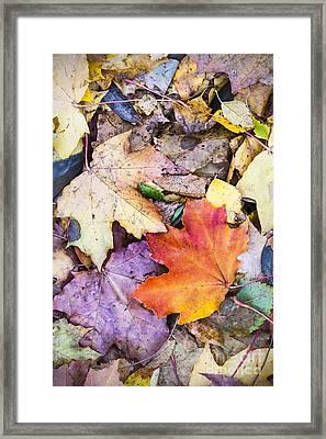 Fallen Leaves Framed Print by Lasse Ansaharju