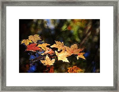 Fallen Leaves On Pond Framed Print by Debbie Oppermann