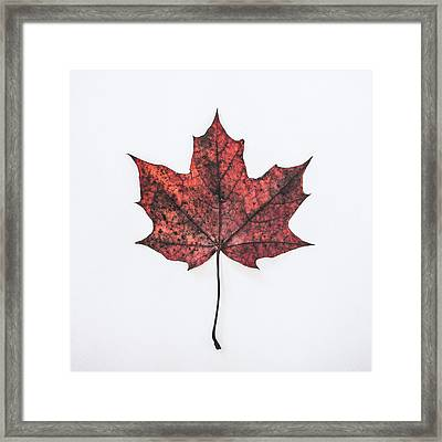 Fallen Red Framed Print by Kate Morton