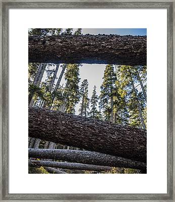 Fallen Trees Framed Print by Pelo Blanco Photo