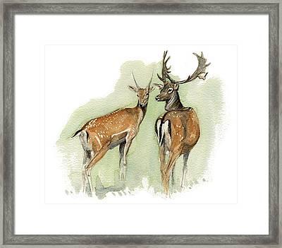 Fallow Deer Framed Print by Chris Pendleton