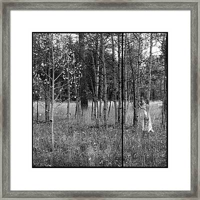 Falls Hidden Beauty Framed Print by Brad Scott