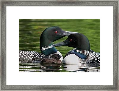 Family - Famille Framed Print by Michel Legare