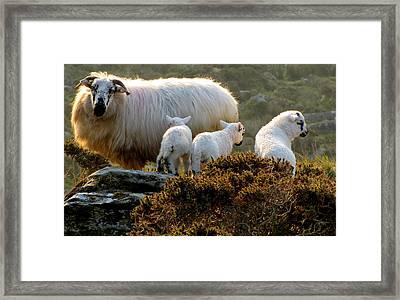 Family Framed Print by Barbara Walsh