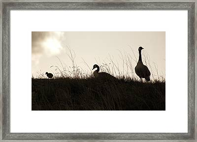 Family Time Framed Print by Marilyn Hunt