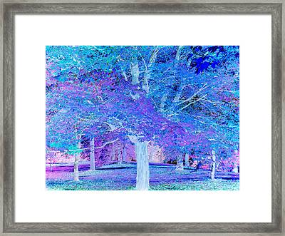 Fantasy Forest  Framed Print by Connie Handscomb