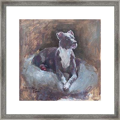 Faris 1 Framed Print by Becky Kim