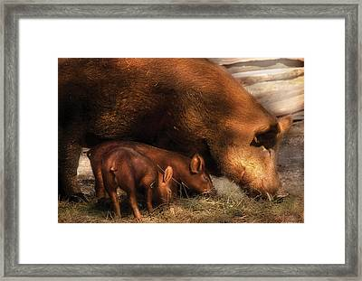 Eat Free Framed Print featuring the photograph Farm - Pig - Family Bonds by Mike Savad