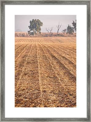 Farm Field Fog Framed Print by Steve Gadomski