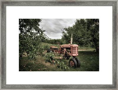 Farmall Tractor On A Farm  Framed Print by Joann Vitali