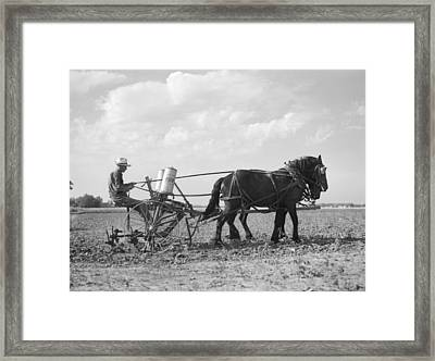 Farmer Fertilizing Corn Framed Print by Arthur Rothstein