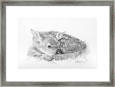 Fawn In The Grass Framed Print by Roy Anthony Kaelin