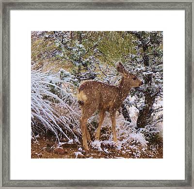 Fawn's First Snow Framed Print by Feva Fotos