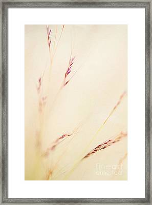 Feather Grass Framed Print by Tim Gainey
