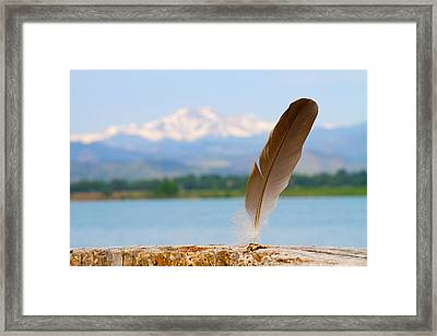 Feather Framed Print by James BO  Insogna