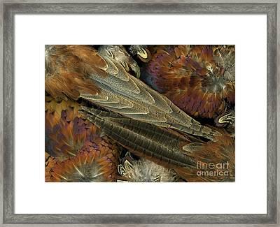 Featherdance Framed Print by Christian Slanec