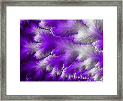 Feathers Framed Print by Darren Hayes