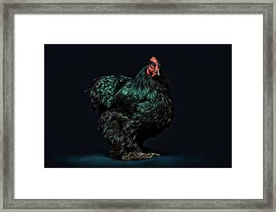 Feathers Framed Print by John Towner