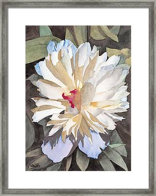 Feathery Flower Framed Print by Ken Powers