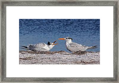 Feed Me Framed Print by HH Photography of Florida