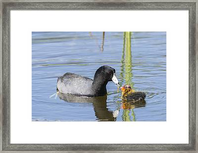 Feed Me Framed Print by Loree Johnson