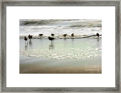 Plundering Plover Series 2 Framed Print by Angela Rath