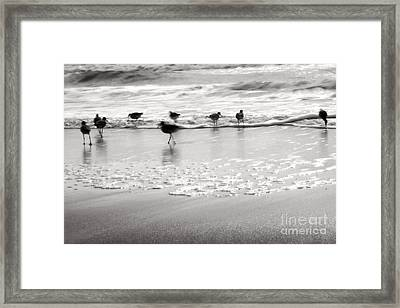 Plundering Plover Series In Black And White Framed Print by Angela Rath