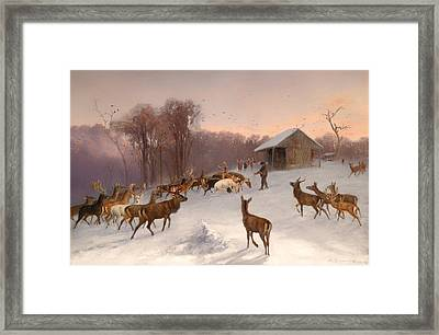 Feeding Of Fallow Deer And Red Deer In Winter Framed Print by Mountain Dreams