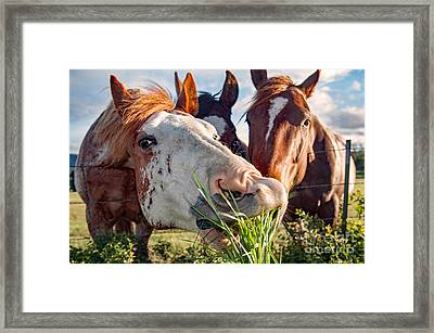 Feeding Time Framed Print by Michael Ayers