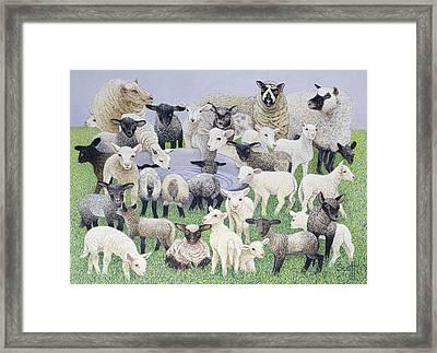 Feeling Sheepish Framed Print by Pat Scott