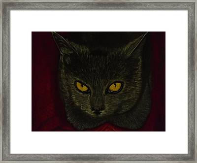 Felix Framed Print by D Rogale