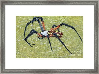 Female Orb Spider -1 Framed Print by Beverly Fuqua