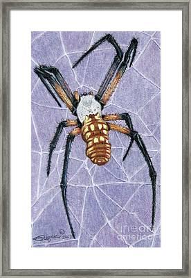 Female Orb Spider Framed Print by Beverly Fuqua