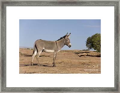 Feral Donkey Framed Print by Jean-Louis Klein & Marie-Luce Hubert