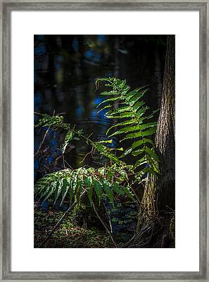 Fern And Cypress Framed Print by Marvin Spates