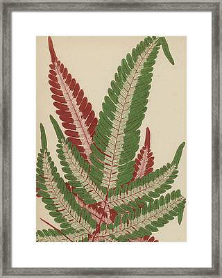 Fern Framed Print by English School