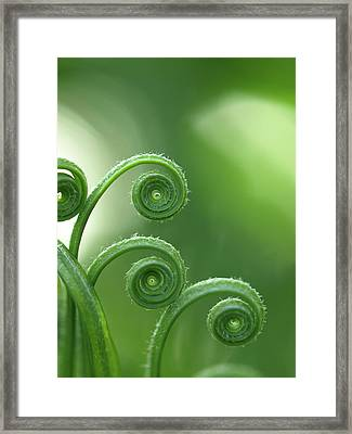 Fern In Forest Framed Print by © Machel Spence